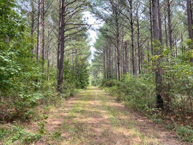 0 Stump Bridge Rd, Canton, MS 39046 (MLS #335326) :: Mississippi United Realty