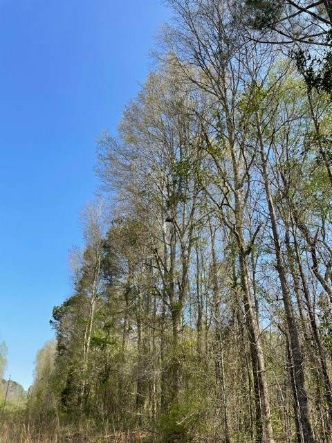 244 S Coleman Rd, Forest, MS 39074 (MLS #339083) :: eXp Realty