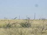 Gaines County Crp, 78.82 Acres - Photo 3