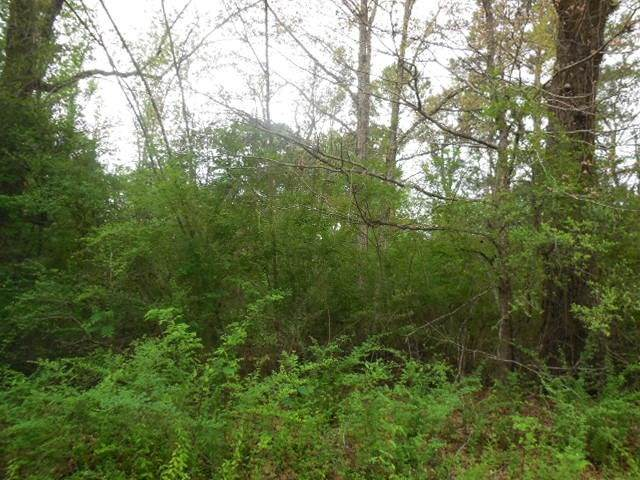 138 Cole Rd, Bronson, TX 75930 (MLS #202319) :: Triangle Real Estate