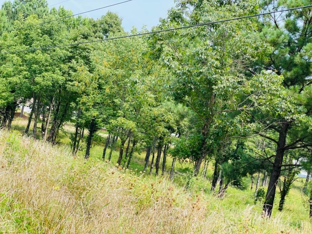 719 Persimmion Ridge - Photo 1