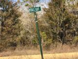 42.90 Acres Strawberry River Road - Photo 2