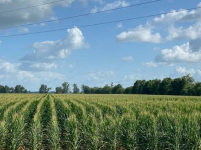 38 Acres Hwy 14, Trumann, AR 72472 (MLS #10087721) :: Halsey Thrasher Harpole Real Estate Group