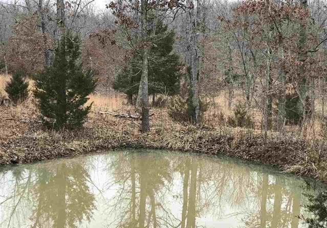 00 Powell Hollow Road, Williford, AR 72482 (MLS #10073555) :: REMAX Real Estate Centre
