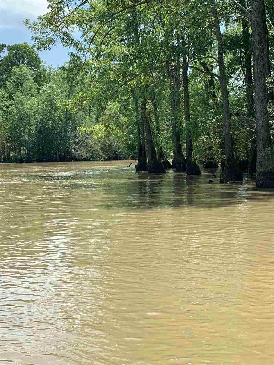 143.8 acres Greene County - Photo 1
