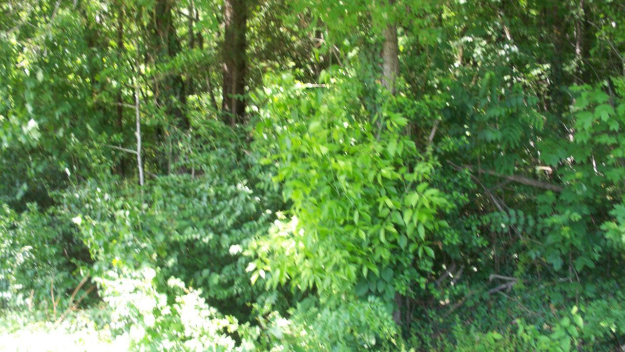 Wedgewood Rd - Photo 1