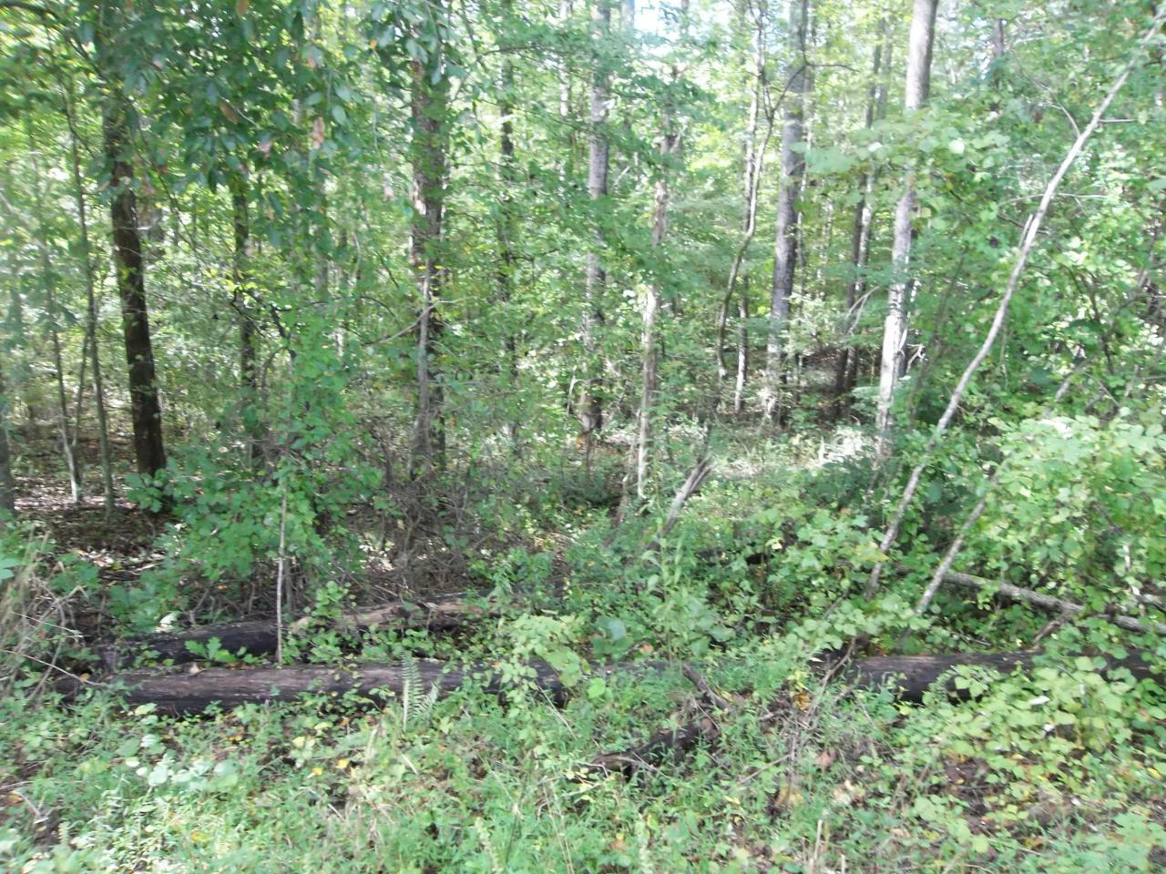 Sequoyah Lane - Photo 1