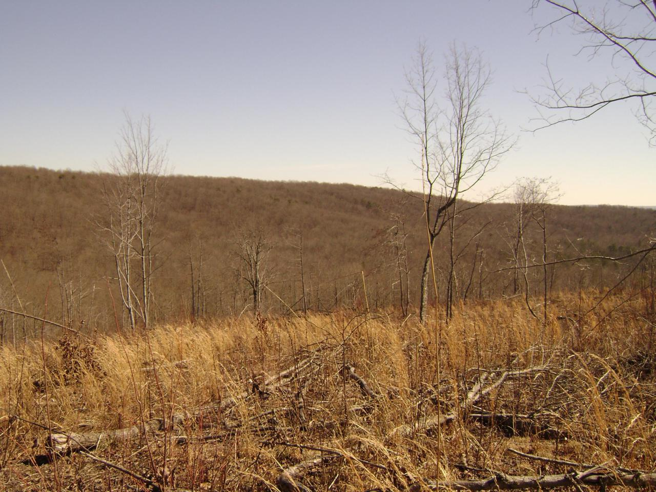 Off Daus Mnt./County Line Rd - Photo 1