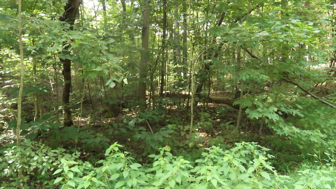 Deer Creek Tr - Photo 1