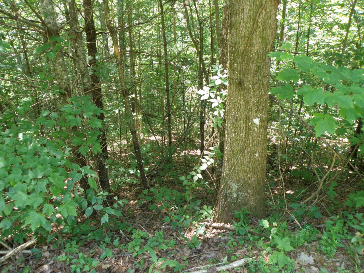 Lot 11-C Mountain Rest Way Way - Photo 1