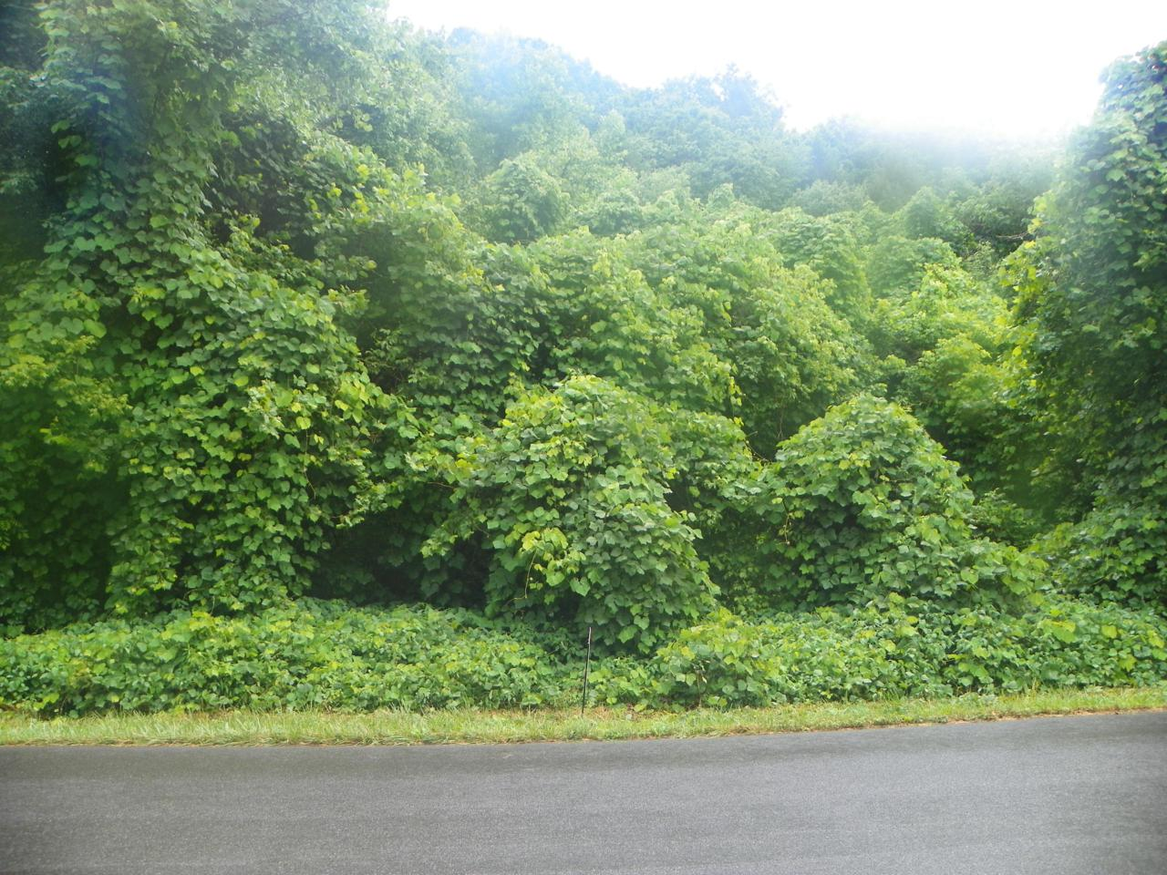 Lot# 29 Old Mountain Road - Photo 1