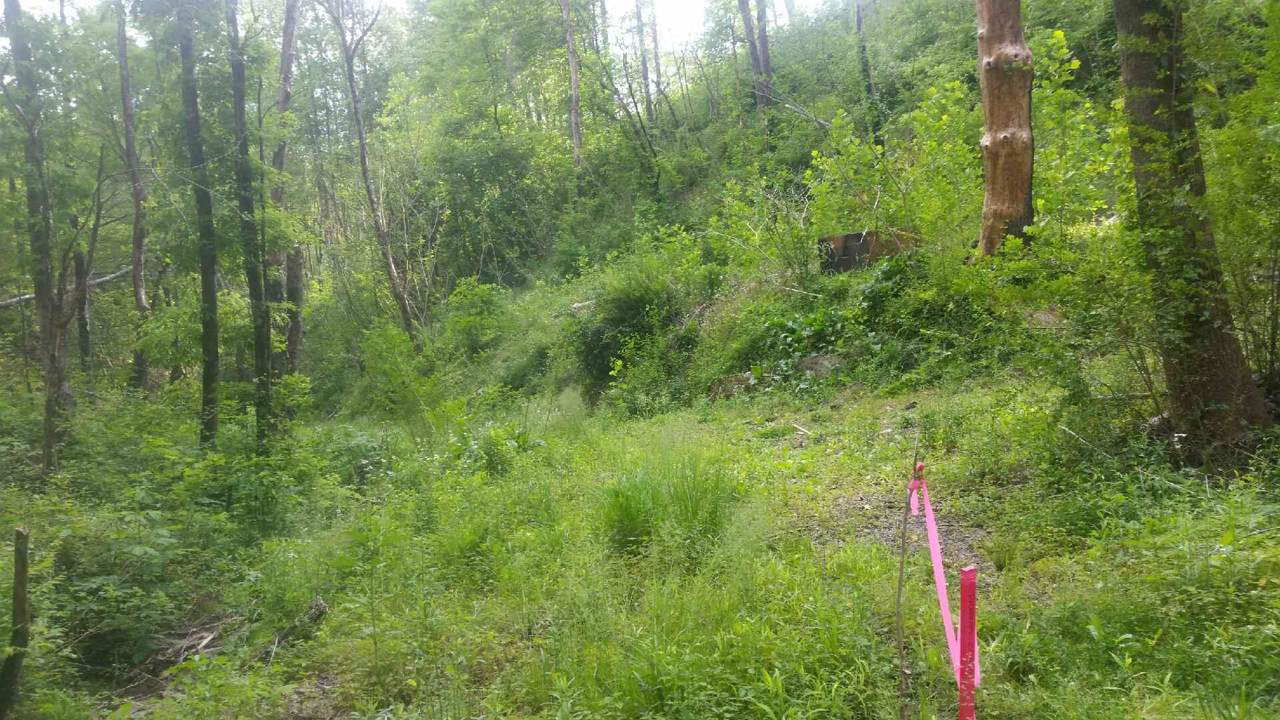 723 Gnatty Branch Rd - Photo 1