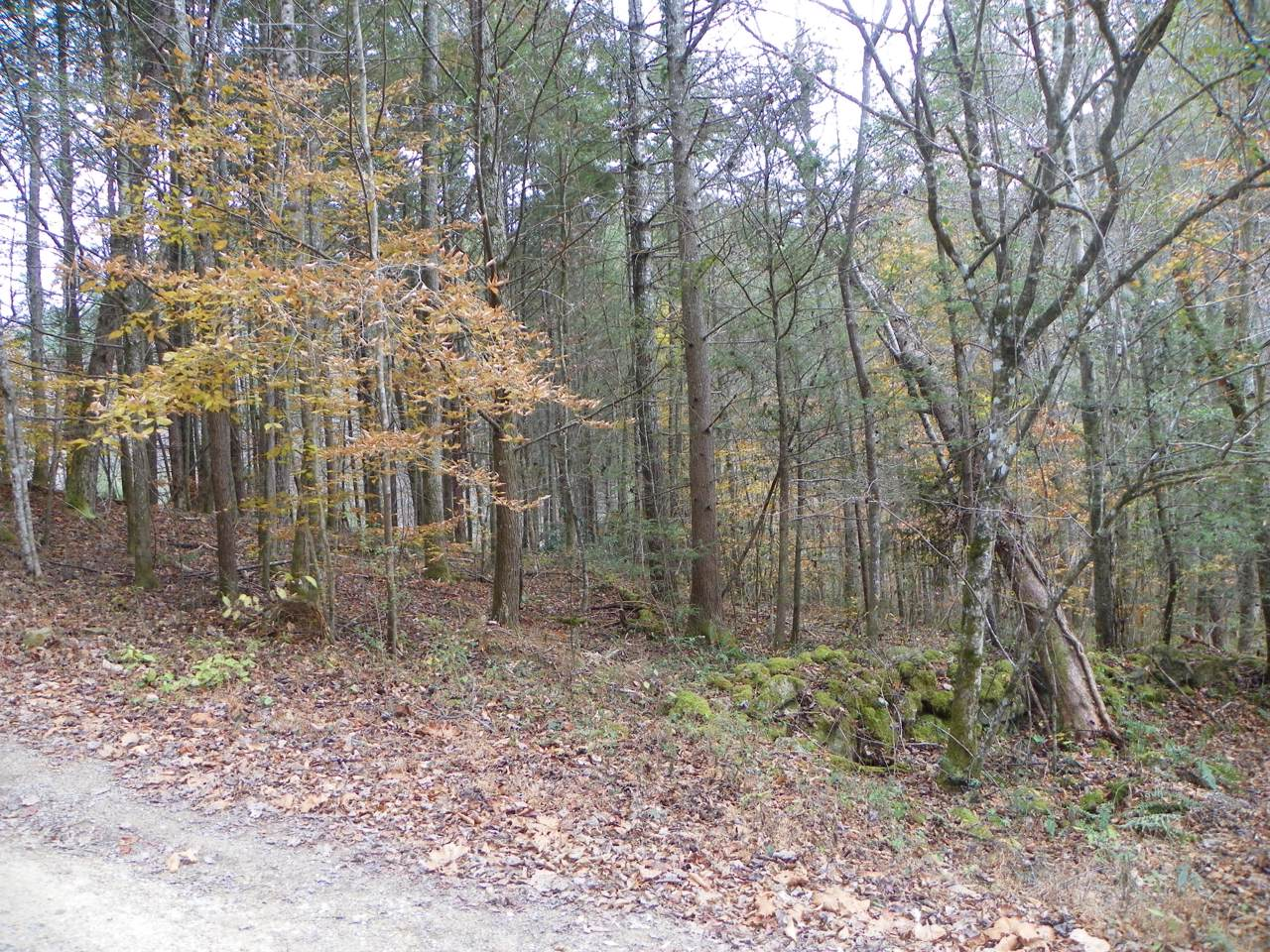 Lot#122 Creek Hollow Way - Photo 1