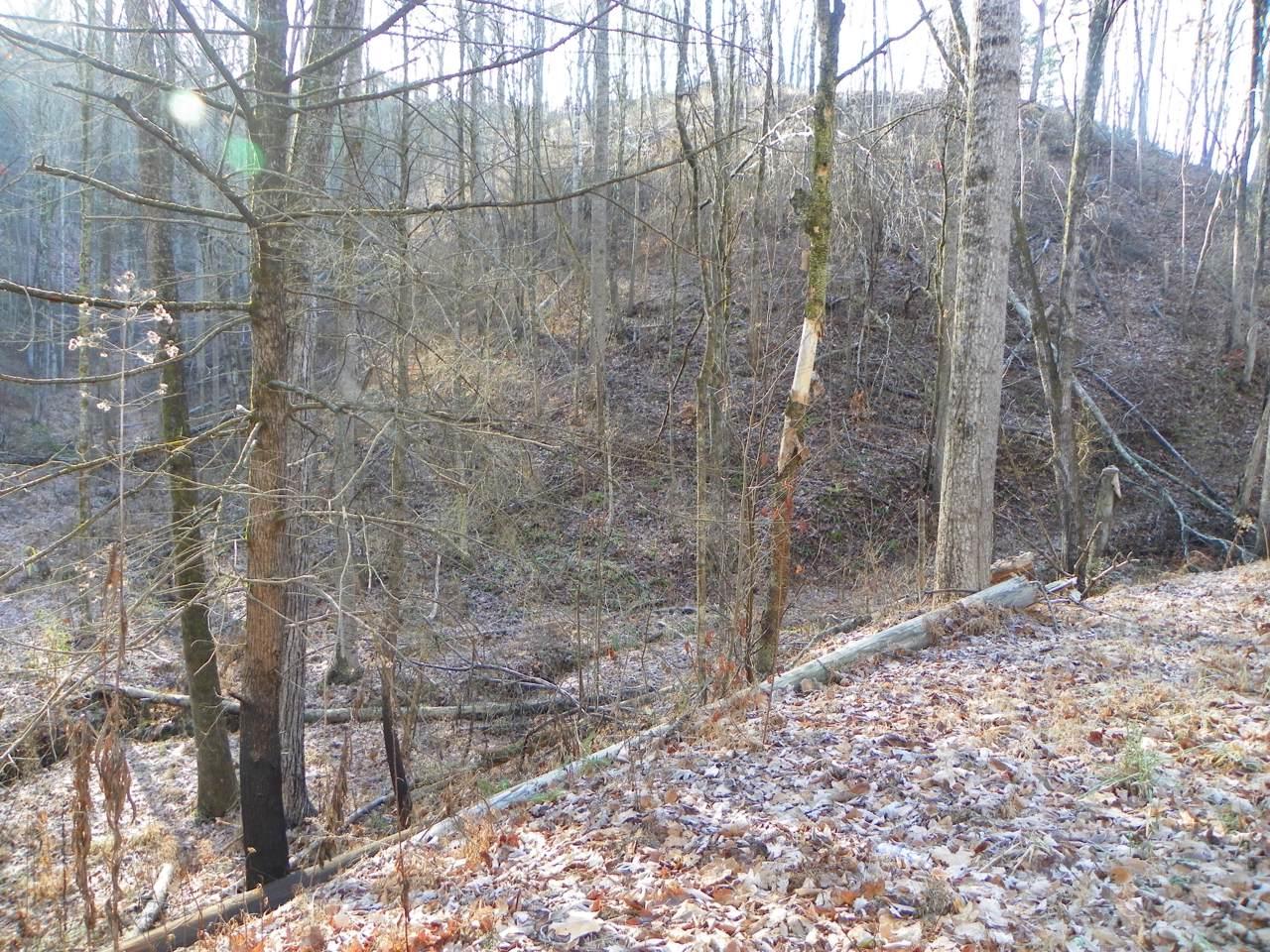 2.59 Acres Lones Branch Lane - Photo 1