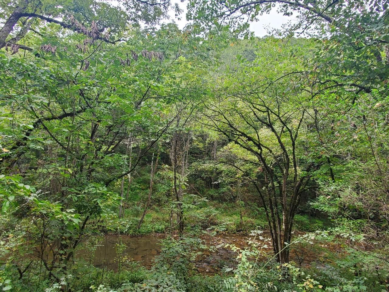 Hardy's Creek Rd - Photo 1