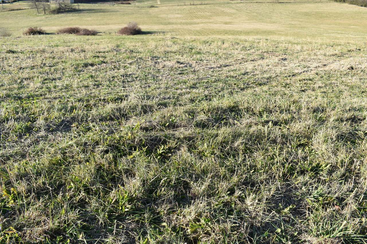 Lot 7 Mccleary Rd - Photo 1