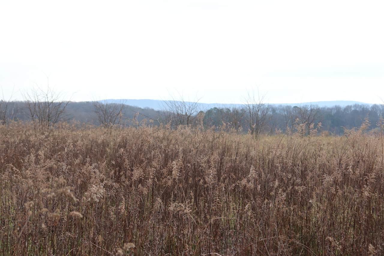000 County Road 782 - Photo 1
