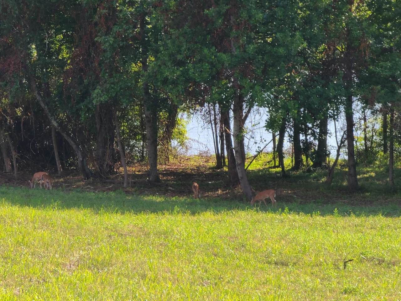 Emory River Road,Lots 8 & 9 Rd - Photo 1
