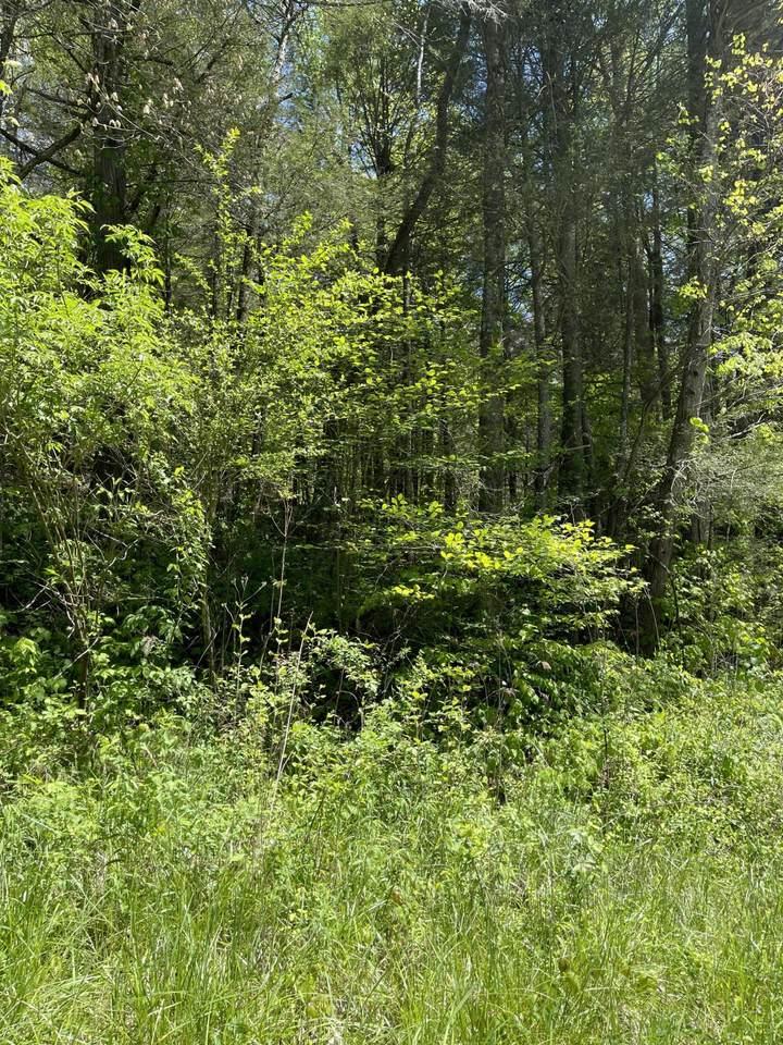158 Laurel Branch Rd - Photo 1