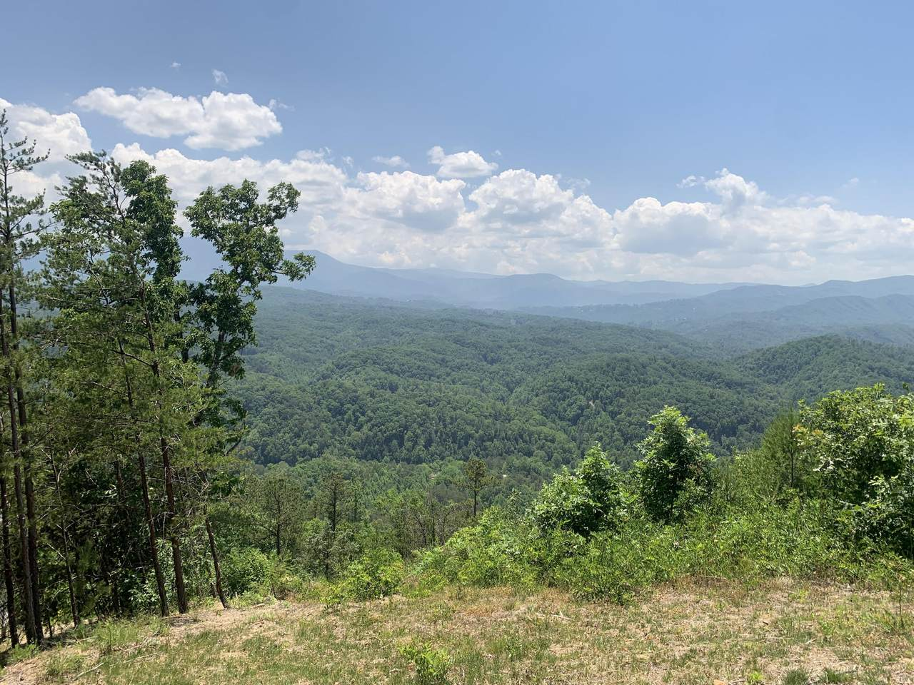 Timber Ridge Way - Photo 1