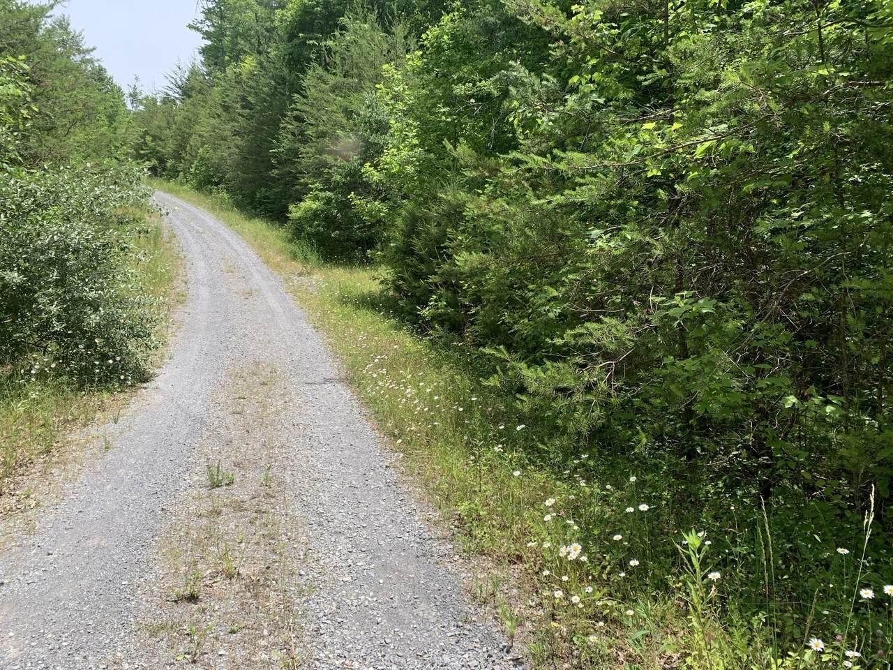 Hedge Maple Way - Photo 1