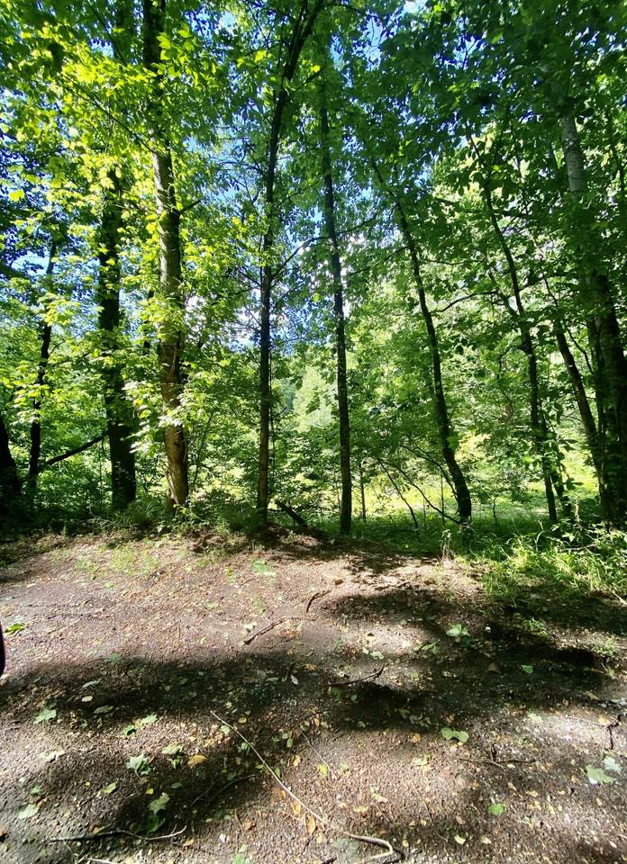 Earls Hollow Rd - Photo 1