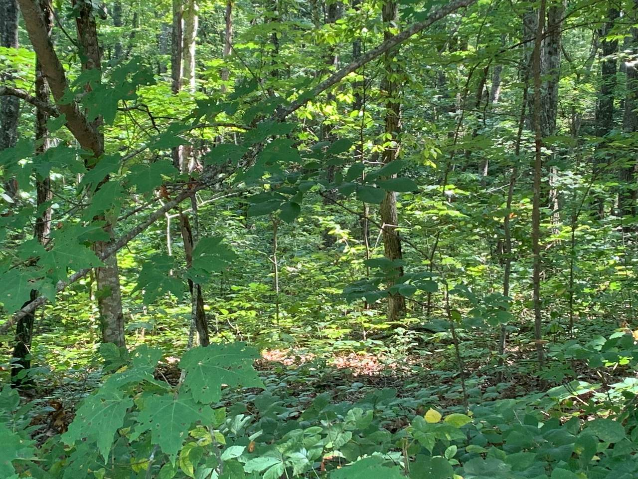 Running Deer - Photo 1