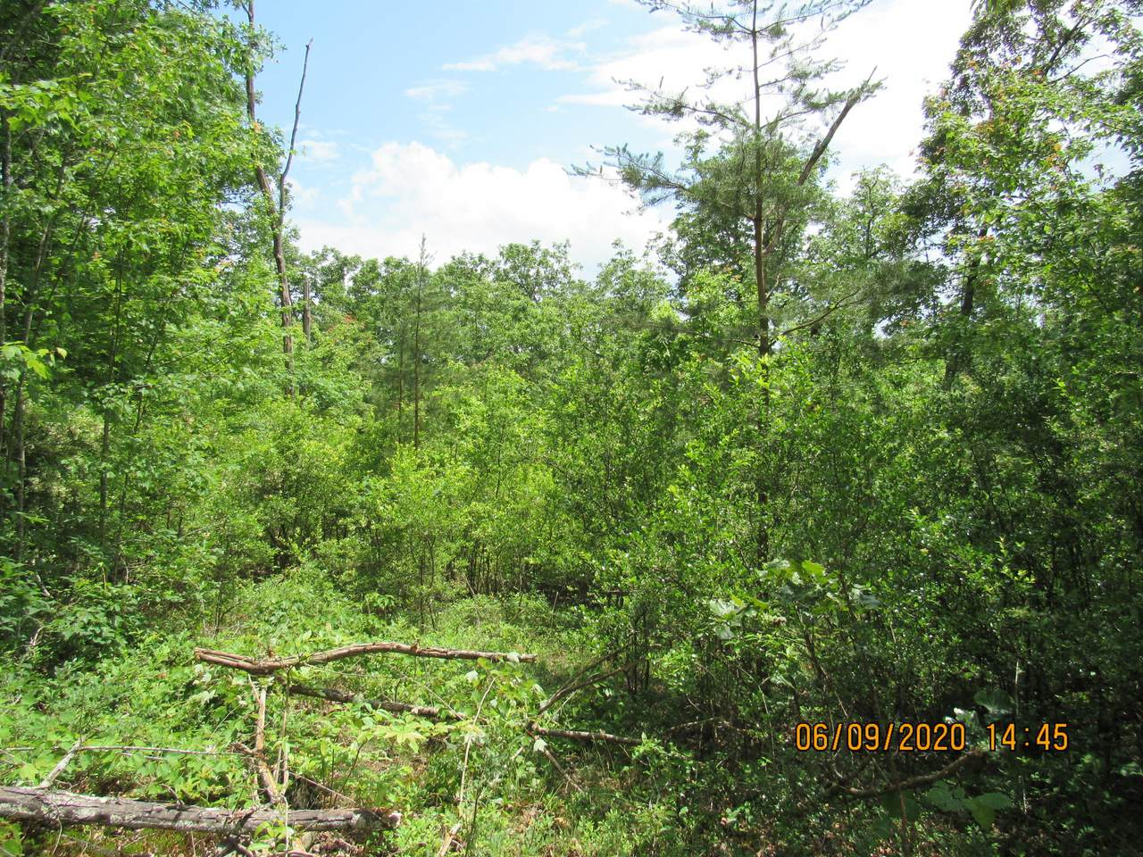 42 AC Coon Hollow Rd - Photo 1