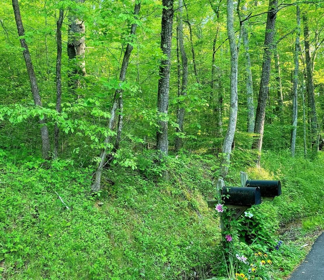 10 acres Pond Ridge Road - Photo 1