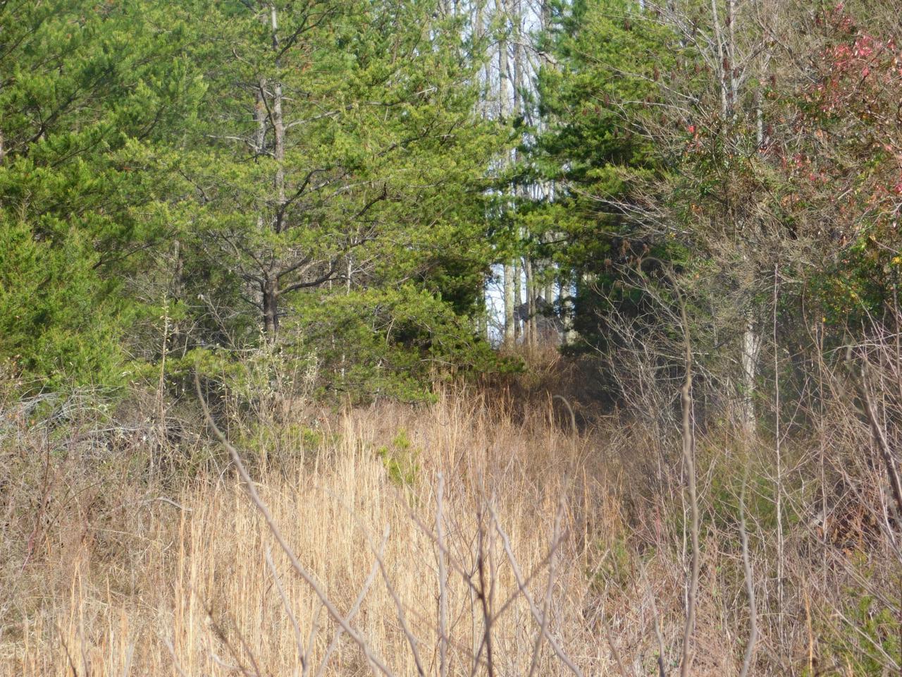 Tbd Jones Ridge Rd - Photo 1