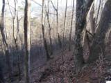 00 Scenic Trail - Photo 13