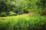 Hatcher Mountain Rd - Photo 5