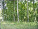 Red Oak Ln, Lot 267 Drive - Photo 1