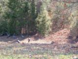 Lot 63 Deer Run Tr - Photo 14