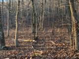 370 Duckwood Lane - Photo 3