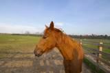 Saddle Lane - Photo 36
