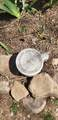 656 Chicory Way - Photo 27