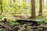 1236 Chestnut Creek Way - Photo 6