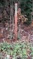 10.18 Acre Stump Hollow Rd - Photo 13