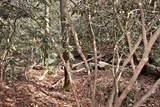 32.8 acres Elrod Circle - Photo 35