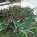 147 Nashboro Greens - Photo 4