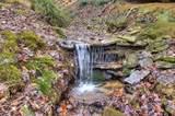 2409 Shady Creek Way - Photo 3