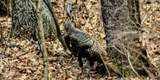 3393 Birds Creek Rd - Photo 7