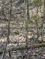 2410 Spence Mountain Loop - Photo 7
