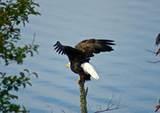 315 Eagle Ridge Drive - Photo 27
