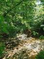 501 Lick Creek Road Rd - Photo 7