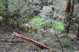 4913 Mount Helen Rd - Photo 32