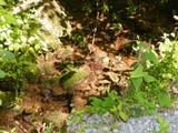 Par. 3 & 4 Obes Branch Rd - Photo 12