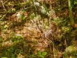 Par. 3 & 4 Obes Branch Rd - Photo 29