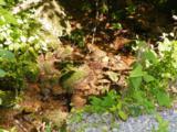 Par. 3 & 4 Obes Branch Rd - Photo 5